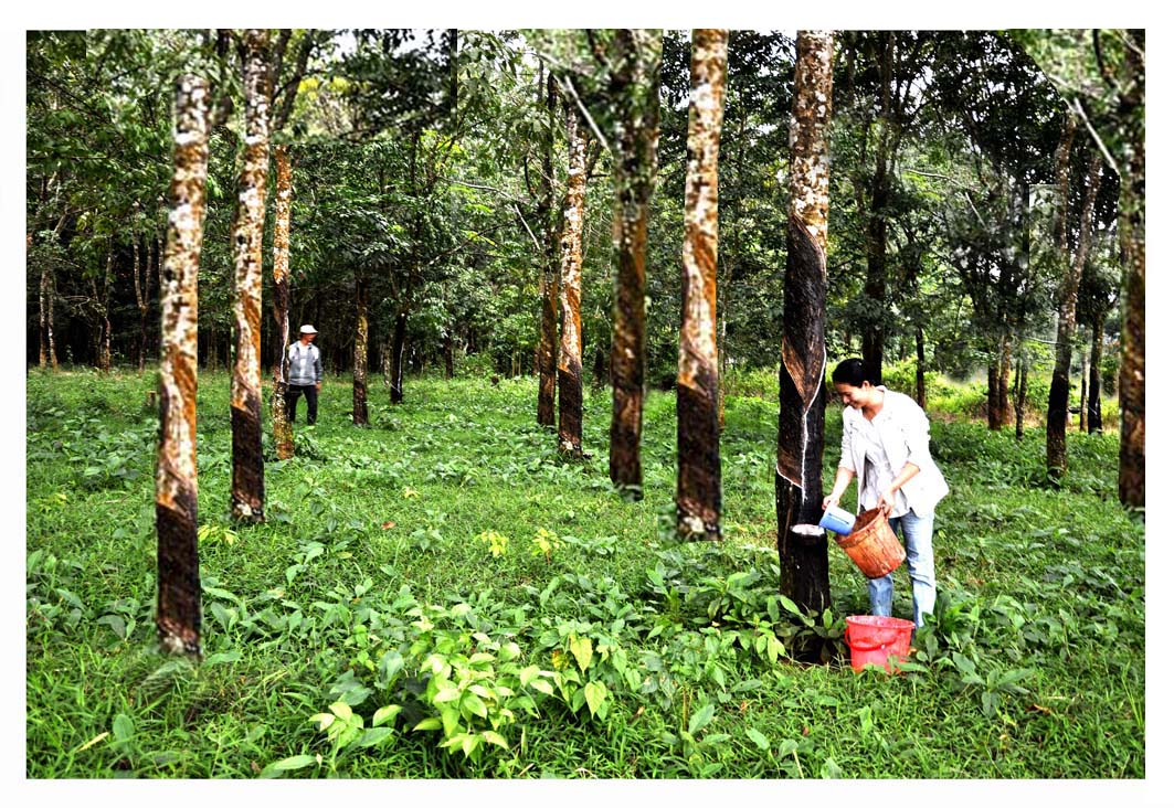 Promoting potential of Dak Nong Rubber